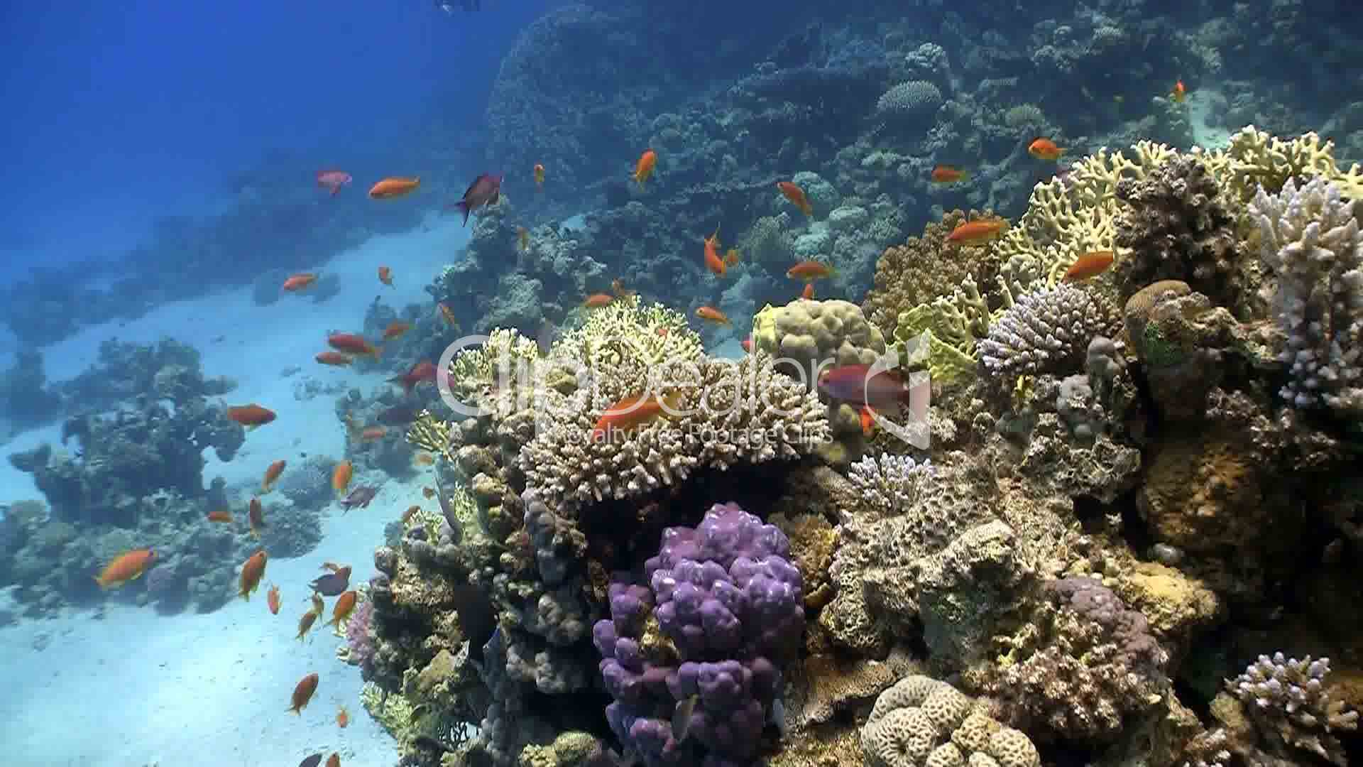 red fish on coral reef Red sea Lizenzfreie Stock Videos