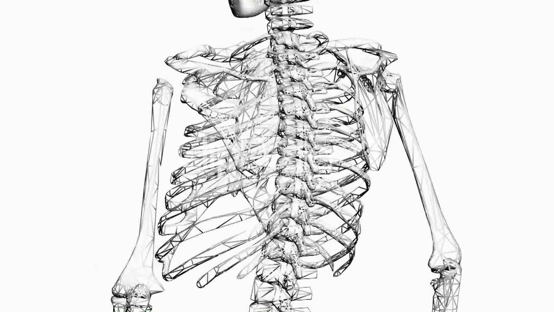 Rotation of 3D skeleton.ribs,chest,anatomy,human,medical