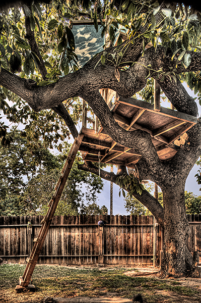 Avocado Tree House