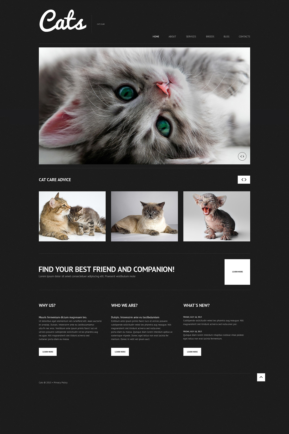 Cat (WordPress theme) Item Picture