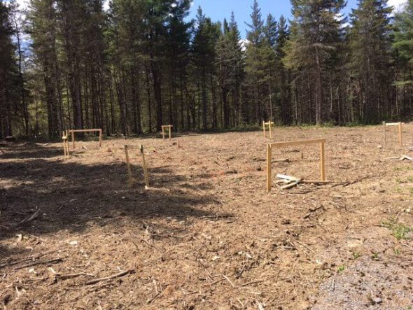 Lot cleared and foundation marked for tiny cabin.
