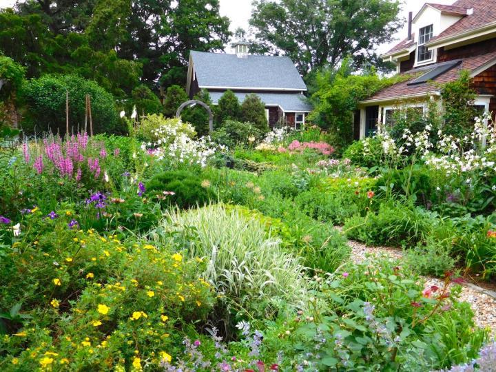 Lush garden filled with an abundance of flowers