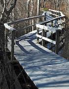 CCNS-PL Beech Forest Boardwalk.jpg