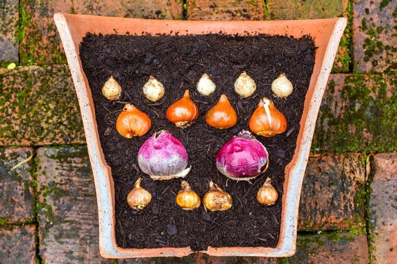 Layered pot planting bulbs buildmumahouse Jola Piesakowska
