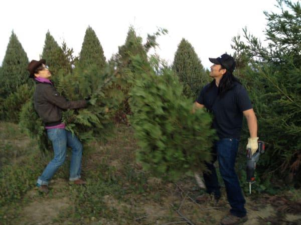 tree-jousting