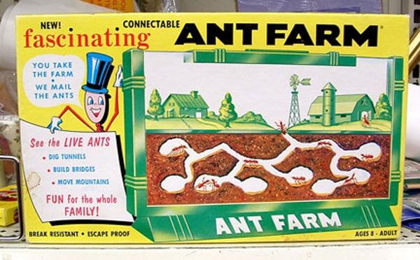 vintage-ant-farm