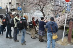 sakura photo cult