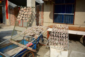 cuttlefish drying out on the road. so tasty, seriously.