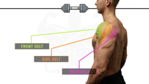 The Greatest Science-Primarily based Dumbbell-Solely Shoulder Exercise For Development