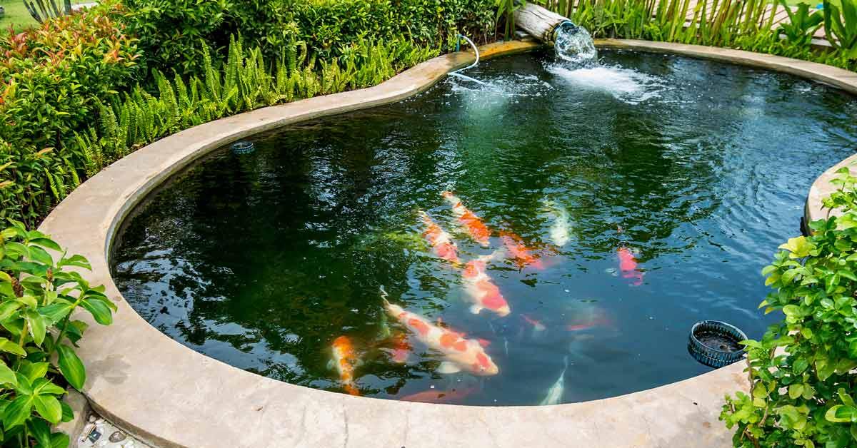 Verschillende Soorten Vijvervissen Voor In Jouw Droomvijver