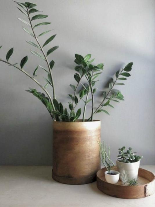 Grote Plantenpot Binnen.Grote Plantenpot Binnen