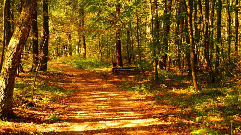 las łagiewnicki w Łodzi - ścieżki piesze i rowerowe