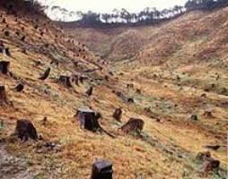 Hutan Gundul  Go Green