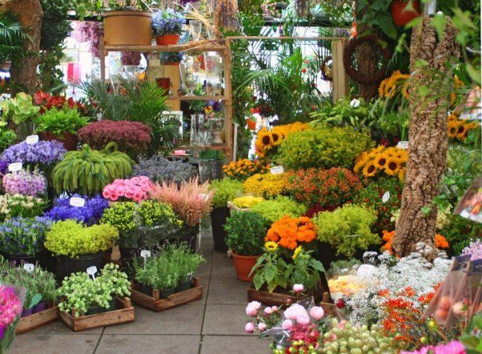 Contoh Tanaman Hortikultura. Bunga