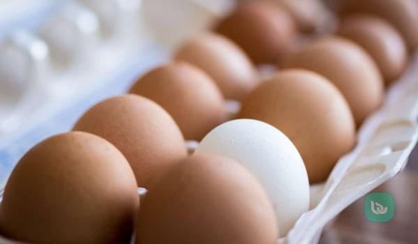 Usaha Agen Telur