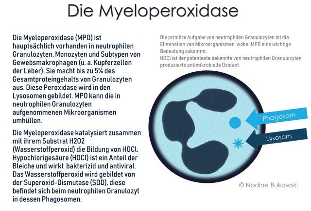 Myeloperoxidase (MPO)