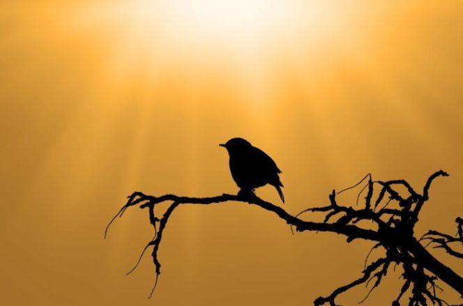 Download 75 Foto Gambar Burung Hantu Di Talenan  Paling Unik Gratis