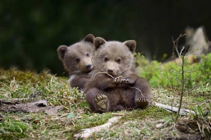 Wallpaper Keren Karakter Beruang