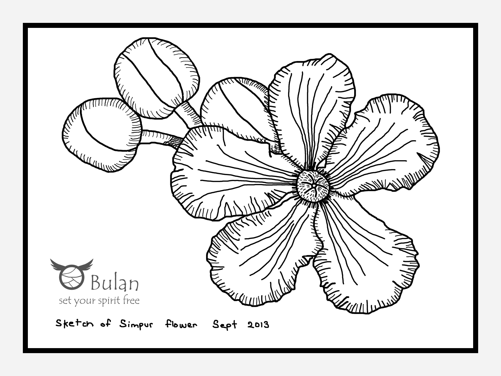Sketch of the day no 130: Simpur flower