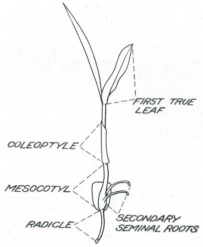 Electric Leaf Blower Back Pack Leaf Blower Wiring Diagram