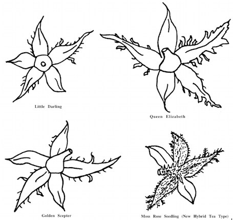 Moore: Study of Miniatures and Mosses (1968)