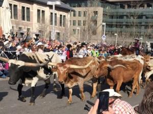 Stock Show Parade