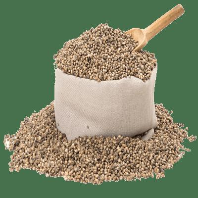 Viable Raw Living Hemp Seed Grain