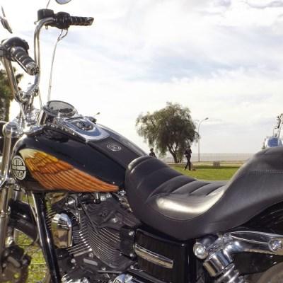 Harley Manu (4)