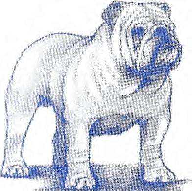 AKC Bulldog Breed Standard
