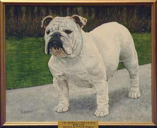 Best of Breed: CH Bowag's Polar
