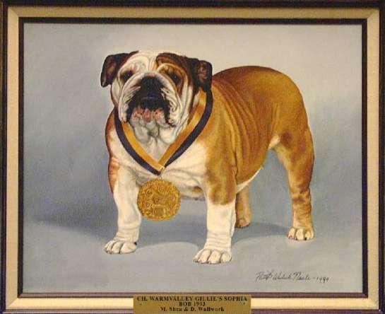 Best of Breed: CH Warmvalley Gillie's Sophia