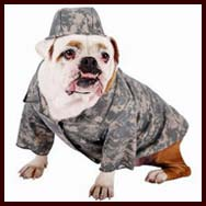 Bulldog Costumes and Clothes (Halloween Dog Costumes)