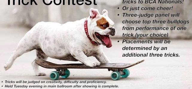 Trick Dog Contest