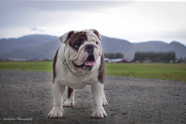 "lenbullan show bulldogs | ""we live for our bulldogs and they do the"
