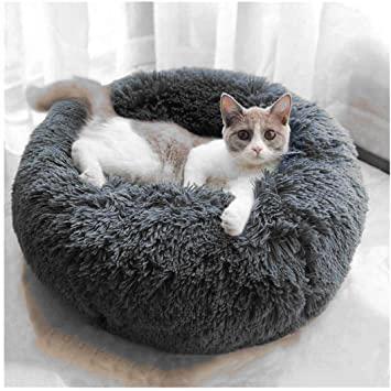 Coté Sieste chat