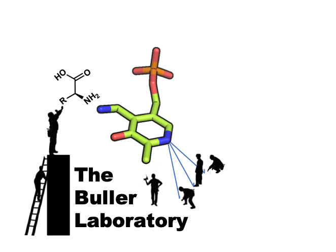 the buller lab – Putting enzymes to work!