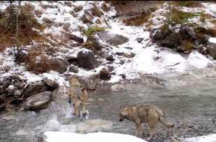 Au retour des loups image documentaire
