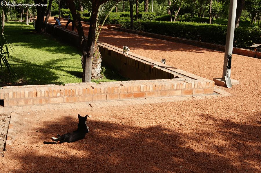 chats du cyber park
