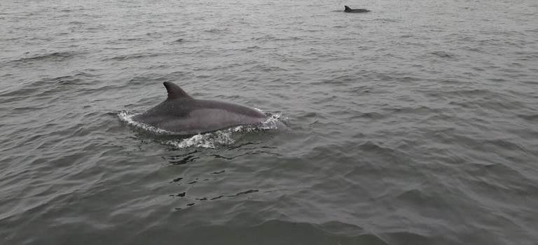dauphin islas ballestas