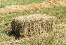 Photo of Guide on Choosing Hay for Dairy Cattle