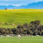 pastureland photo