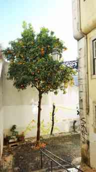 Orangenbaum Alfama