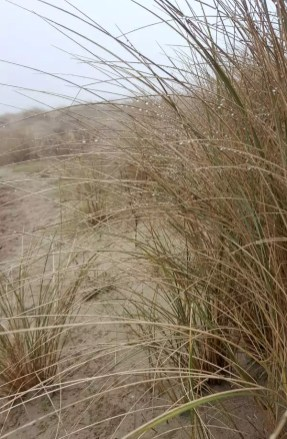 Strand Düne Rockanje