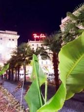 Palmen Mailand bei Nacht