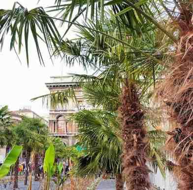 Mailand mit Kind - Tipps - Palmen