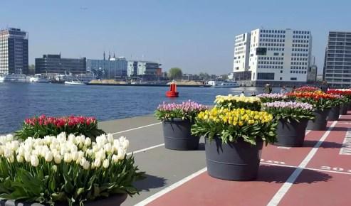 Tulpen Nord-Amsterdam