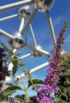 Atomium mit Blüte