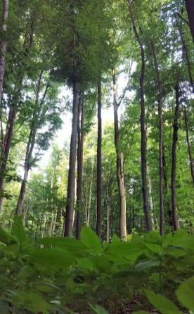 Grüne Umgebung
