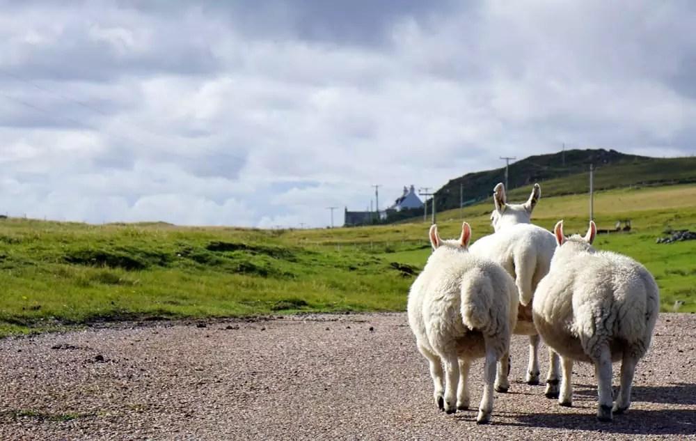 Roadtrip Schottland – Unsere Rundreise mit dem VW-Bus