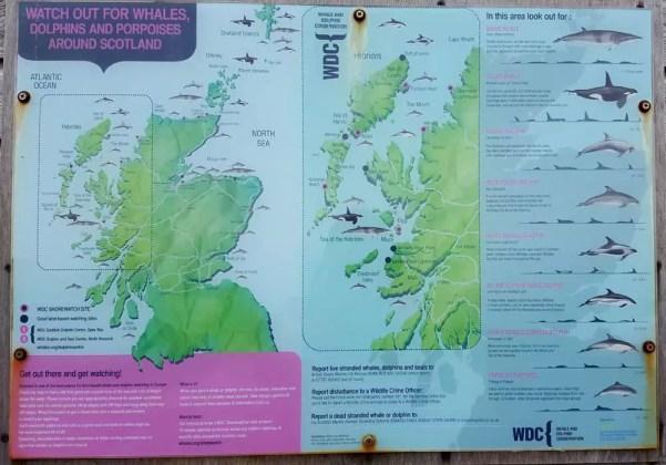Wale beobachten in Schottland